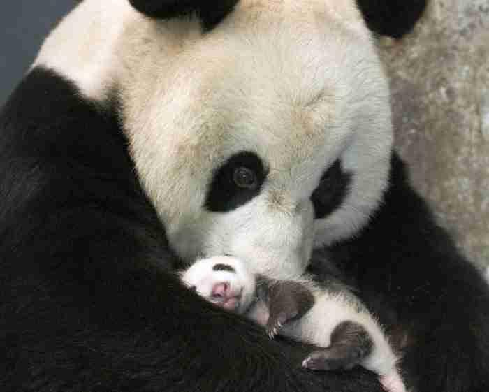 20 μωρά ζώα που θα ζεστάνουν ακόμη και τη πιο κρύα καρδιά