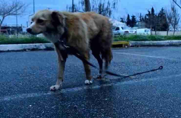 """""""Ομπρέλα"""": Μια ελληνική ταινία μικρού μήκους για τα αδέσποτα που συγκινεί!"""