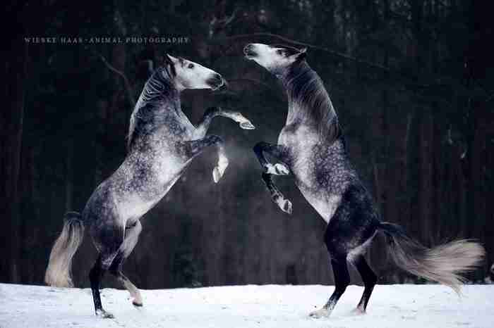 16 φωτογραφίες που παρουσιάζουν την ομορφιά και την μεγαλοπρέπεια των αλόγων