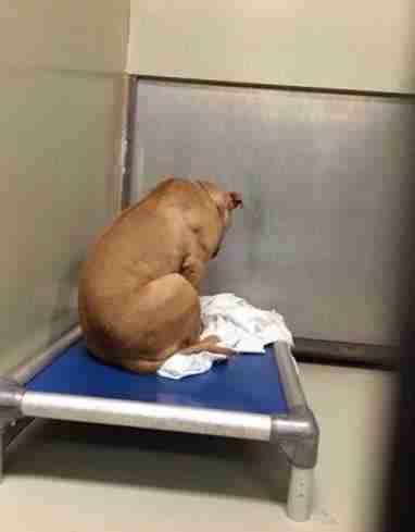 Ο σκυλάκος κάθεται και κοιτάζει έναν τοίχο από τότε που η οικογένεια του τον απέρριψε