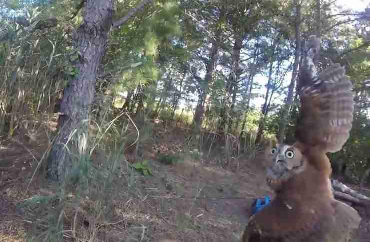 Άκουσε μια κραυγή στο δάσος. Όταν πλησίασε είδε ότι ήταν ένα πλάσμα που είχε απελπισμένα ανάγκη για βοήθεια..