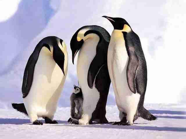 Αυτές οι 20 φωτογραφίες με οικογένειες ζώων, θα ζεστάνουν και την πιο κρύα καρδιά