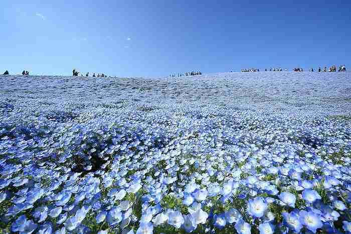Κάθε άνοιξη σε αυτό το πάρκο ανθίζουν 3,5 εκατομμύρια λουλούδια! Το θέαμα είναι μαγευτικό