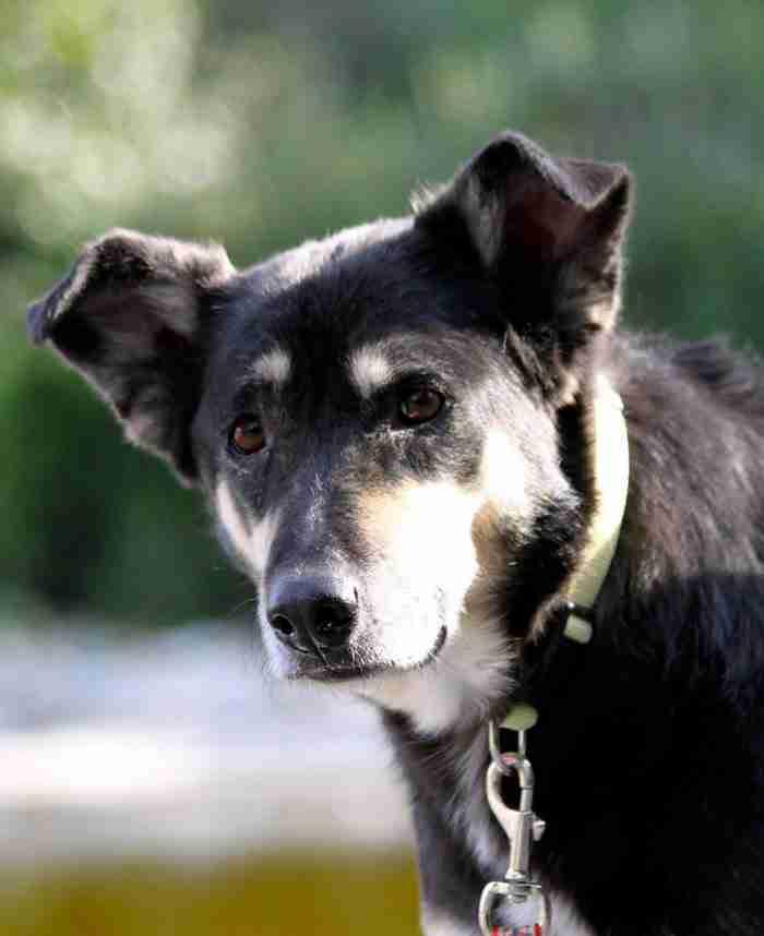 Η ιστορία της Πέτρας. Της σκυλίτσας που «άνθισε» από την αγάπη αυτών που την έσωσαν.