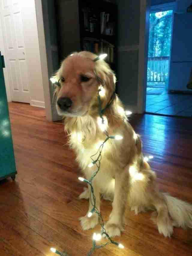 Παράτησαν αυτό το σκυλάκι μόνο του στο δάσος να πεθάνει. Αλλά η ιστορία είχε ευτυχισμένο τέλος