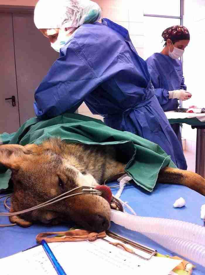 Ένας οδηγός χτύπησε αυτόν τον λύκο και τον άφησε να πεθάνει. Αυτό που συνέβη στη συνέχεια είναι συγκινητικό!