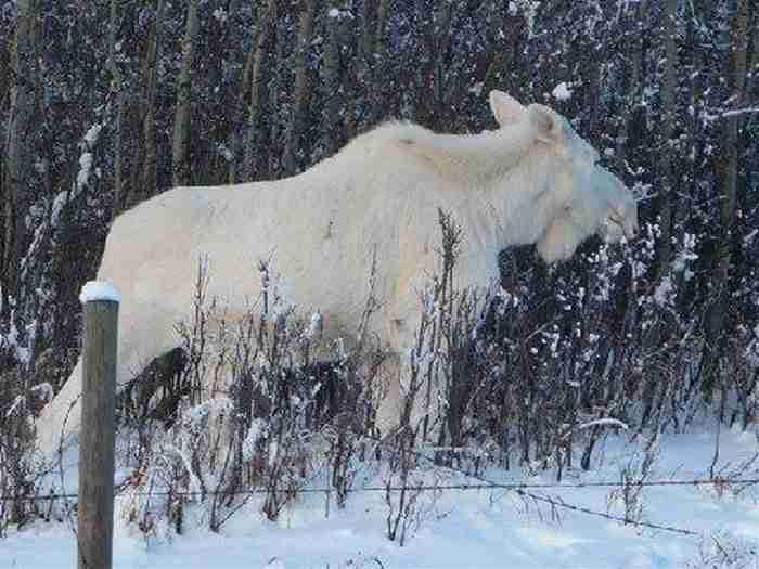 Κάποιος φωτογράφισε στον Καναδά κάτι που δεν έχετε δει ποτέ ξανά στη ζωή σας!