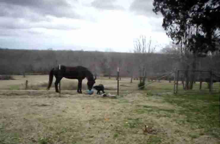 Δεν μπορούσε να καταλάβει γιατί το άλογο του φέρονταν παράξενα. Μέχρι που είδε ποιος ήταν μαζί του..