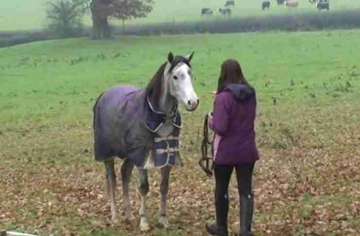 Ήρθε σπίτι της μετά από 3 εβδομάδες. Προσέξτε την αντίδραση του αλόγου της!