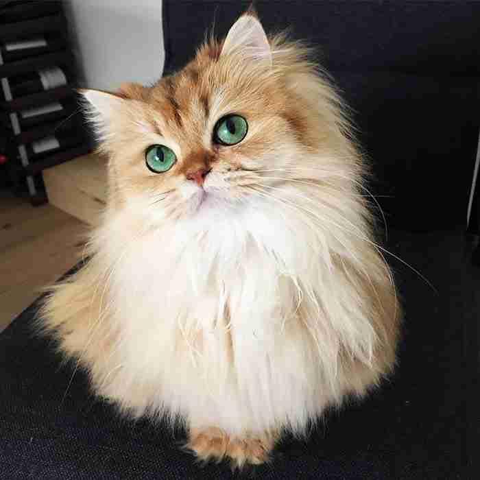 Γνωρίστε την Smoothie, τη γάτα με την μεγαλύτερη φωτογένεια στον κόσμο!