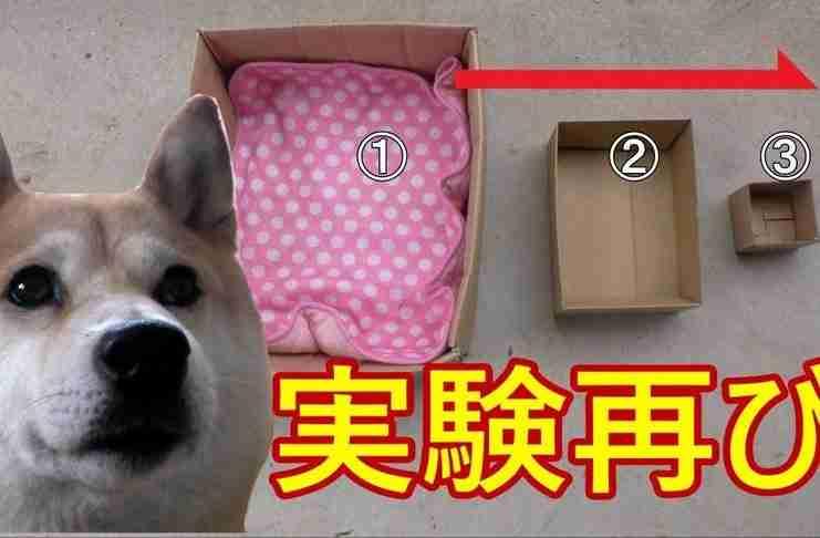 Ο ιδιοκτήτης του όλο και μικραίνει το κουτί που κάθεται στο αυτοκίνητο. Θα τα χάσετε στο τελευταίο!