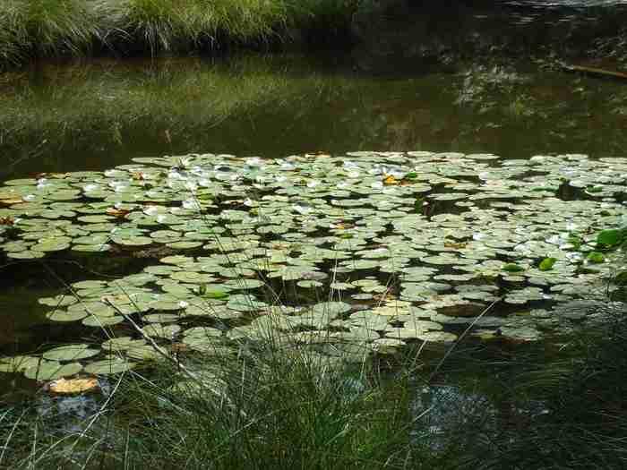 Αποτέλεσμα εικόνας για λιμνη ζορικα