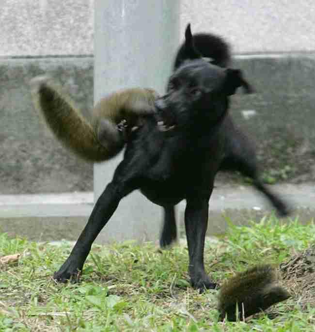 Αυτή η μαμά σκίουρος έκανε κάτι απίστευτο όταν είδε ένα σκυλί να επιτίθεται στο μωρό της
