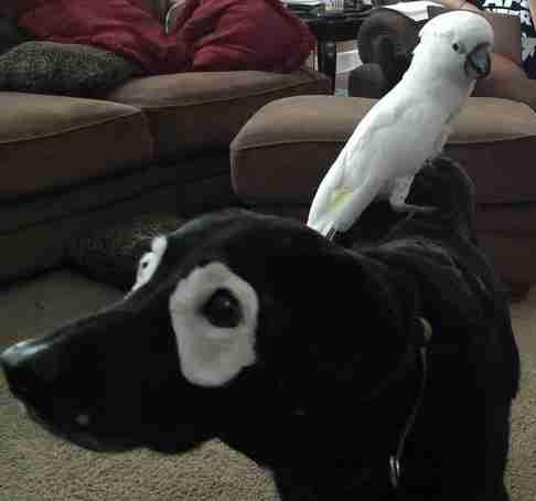 Αυτό το σκυλί μοιάζει σαν να φοράει μάσκα. Αλλά η πραγματικότητα είναι πολύ διαφορετική!