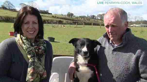 Αυτός ο σκύλος περπάτησε 380 χλμ. για να βρει το πρώην αφεντικό του!
