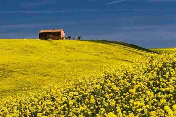 12 φωτογραφίες που αποδεικνύουν ότι η Τοσκάνη γίνεται ακόμα πιο όμορφη την Άνοιξη!