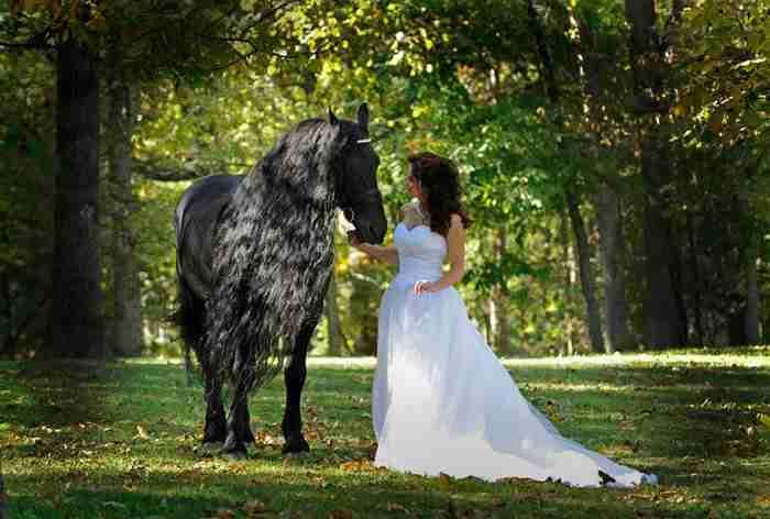 """Γνωρίστε τον """"Φρέντερικ τον Μέγα"""". Το ωραιότερο άλογο στον κόσμο!"""