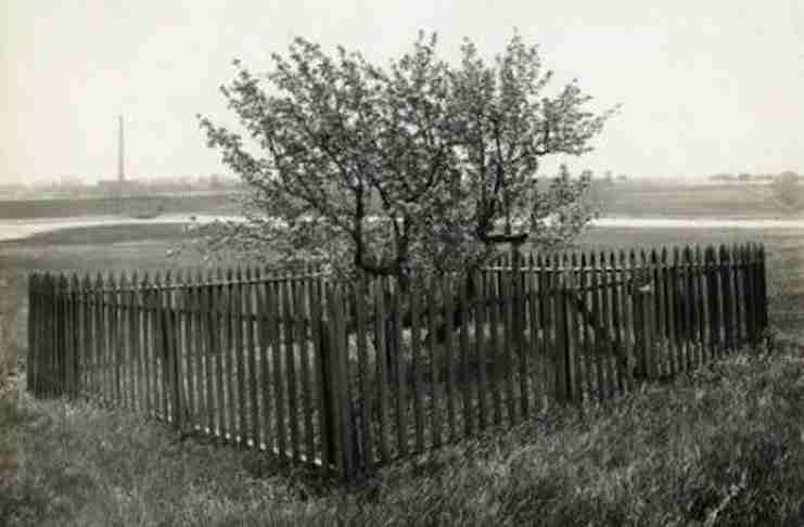 Αυτό το δέντρο ζει 386 χρόνια! Όποιος το πειράξει θα αντιμετωπίσει βαριές συνέπειες.