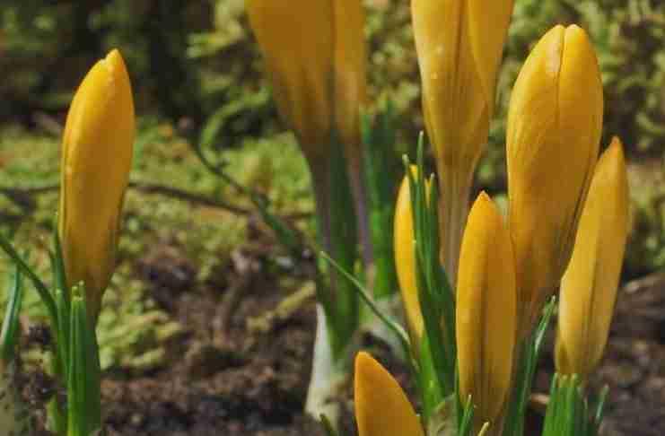 Η φύση που ζωντανεύει την άνοιξη σε ένα υπέροχο βίντεο!