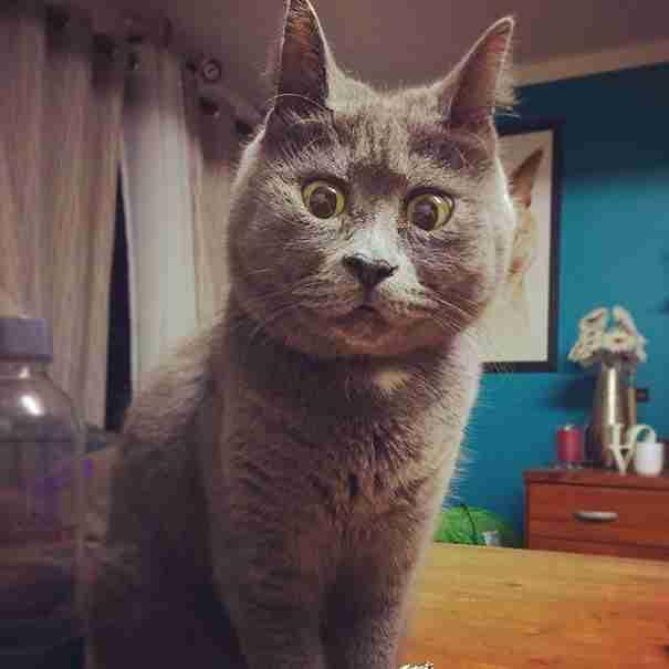 Όλοι πίστευαν ότι η γάτα με το μόνιμα έκπληκτο βλέμμα δεν θα ζούσε. Σήμερα όμως γίνεται 4 ετών!