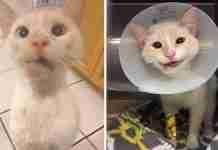 Κτηνίατροι μετέτρεψαν το σπασμένο σαγόνι αυτής της αδέσποτης γάτας σε ένα όμορφο χαμόγελο