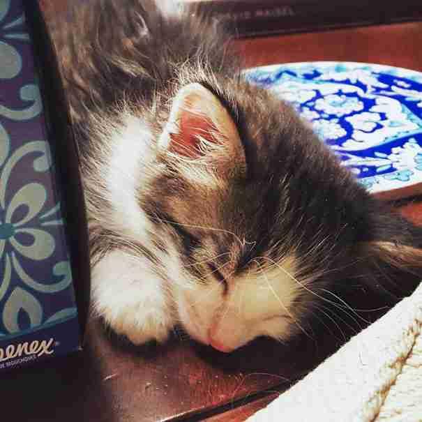 Βρήκε ένα μικρό φοβισμένο γατάκι κάτω από ένα φορτηγό. Δεν μπορούσε να του πει όχι..