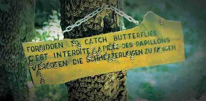 Η κοιλάδα με τις χιλιάδες πεταλούδες: Ένα τοπίο που θυμίζει παραμύθι!