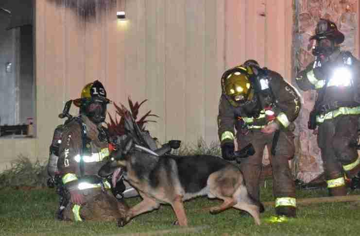 Δύο μικρά παιδιά είχαν παγιδευτεί σε ένα φλεγόμενο σπίτι. 'Ώσπου εμφανίστηκε ένα σκυλί..