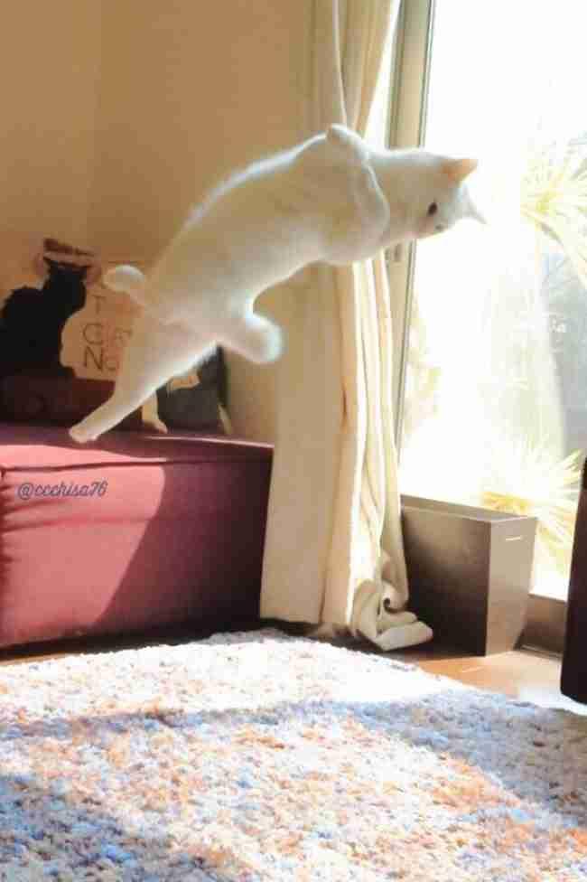Όταν δεν την κοιτάει κανείς αυτή η γάτα χορεύει σαν μπαλαρίνα!