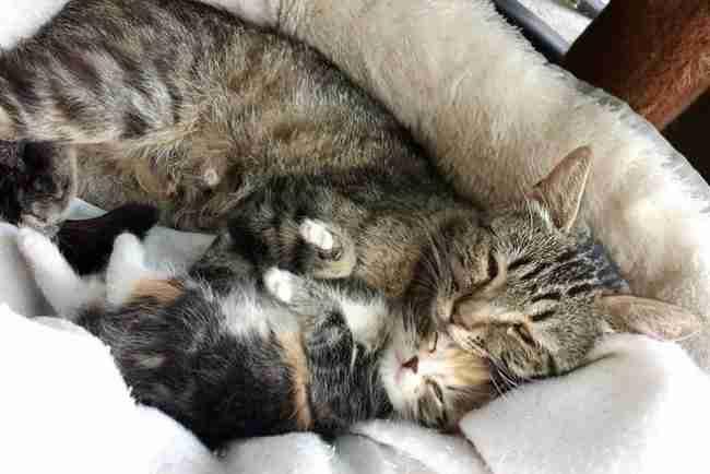 15 φωτογραφίες που αποδεικνύουν ότι το να έχεις παιδιά είναι δύσκολο ακόμη και για τα ζώα!