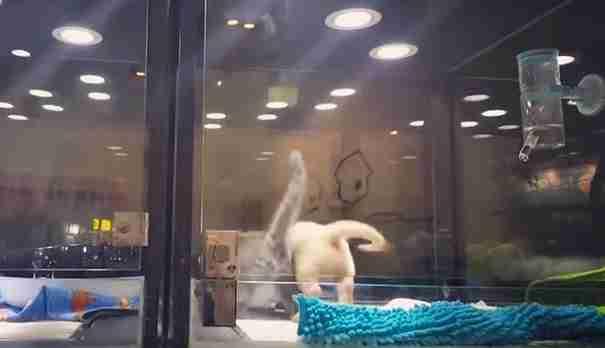 Το κουτάβι ένιωθε μοναξιά τη νύχτα στο Pet Store. Προσέξτε τι έκανε το γατάκι!