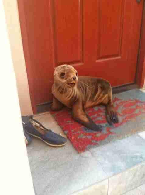 Σε 30 φωτογραφίες τα πιο αξιολάτρευτα ζώα που έχετε δει! Το Νο 4 είναι αληθινό;