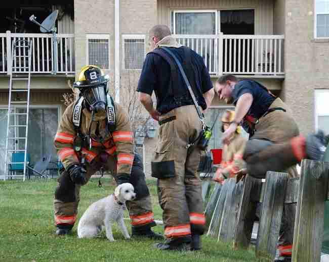 Οι πυροσβέστες μόλις έσωσαν αυτό το κουτάβι από τη φωτιά. Αλλά δείτε το πρόσωπο του! Απίθανο!