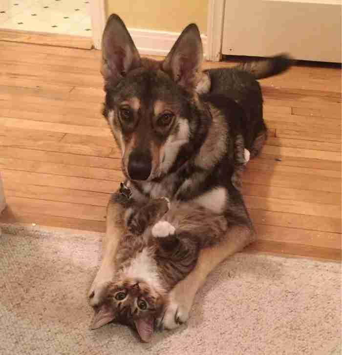Άφησαν το σκύλο να επιλέξει μόνος του τον καινούργιο του φίλο από το καταφύγιο. Δείτε ποιος είναι!