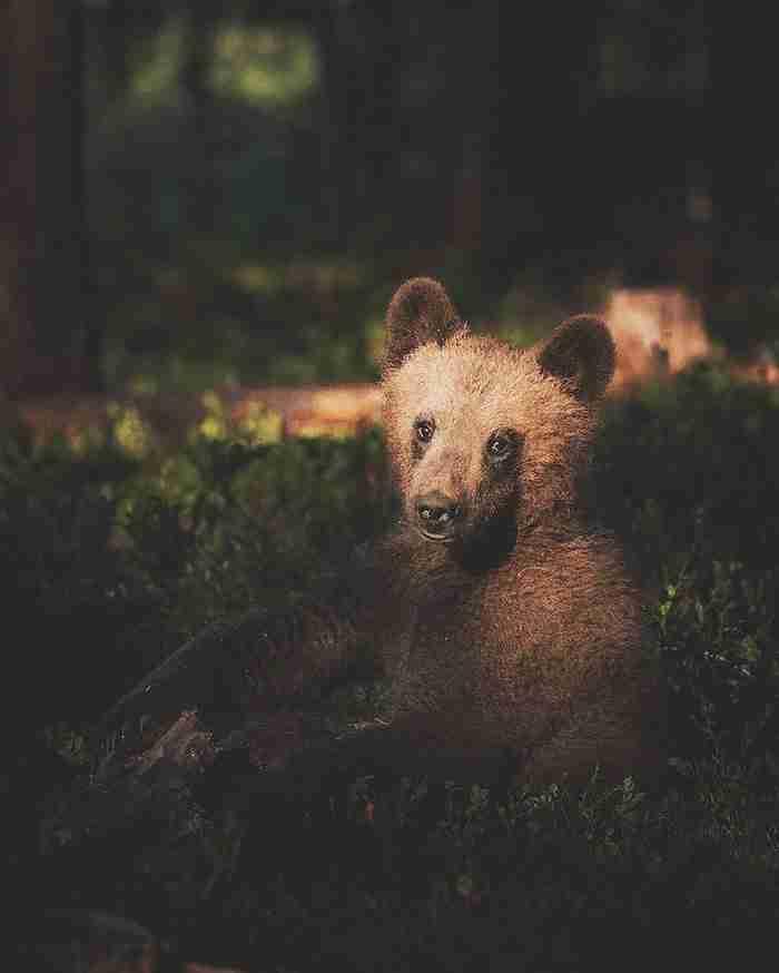 Φωτογράφος καταγράφει την ψυχή του δάσους μέσα από τις απίστευτα όμορφες φωτογραφίες του
