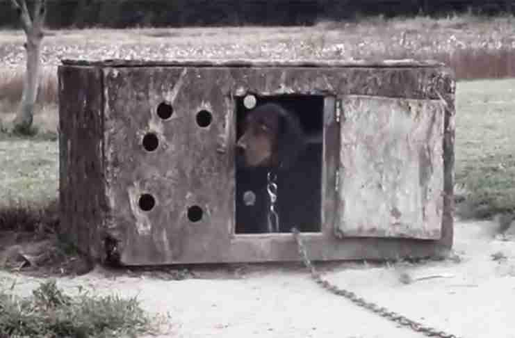 Αυτό το σκυλί ήταν κλειδωμένο για χρόνια. Τι συνέβη όταν το διέσωσαν; Απλά δείτε τα μάτια του..
