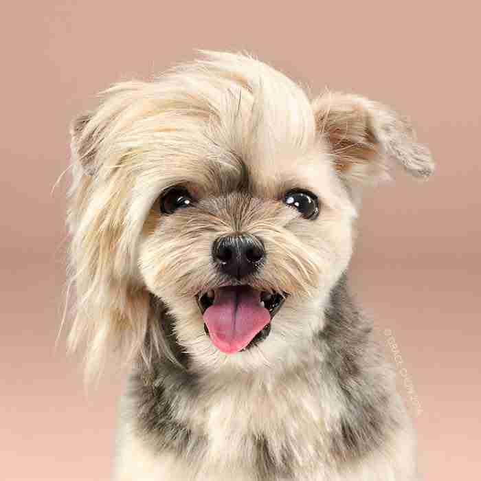 Σκύλοι πριν και μετά το κούρεμα! Η μεταμόρφωση είναι καταπληκτική!