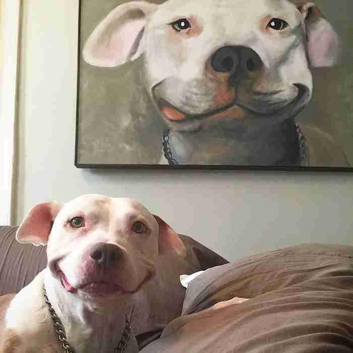 Αυτό το αδέσποτο πίτμπουλ δεν έχει σταματήσει να χαμογελάει από τη μέρα που κάποιος το υιοθέτησε!
