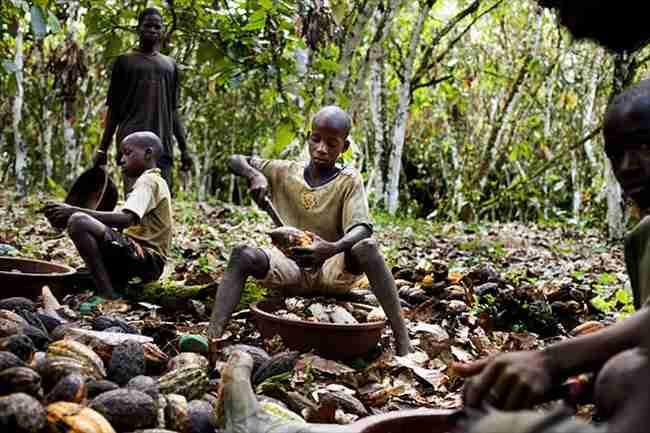 Τα παιδιά που τρώνε τις σοκολάτες και τα παιδιά που φτιάχνουν τις σοκολάτες.
