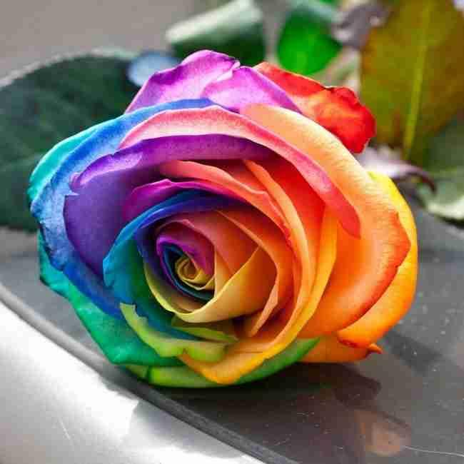 Τα τριαντάφυλλα στα χρώματα του ουράνιου τόξου που θυμίζουν παραμύθι. Δείτε πως θα τα φτιάξετε