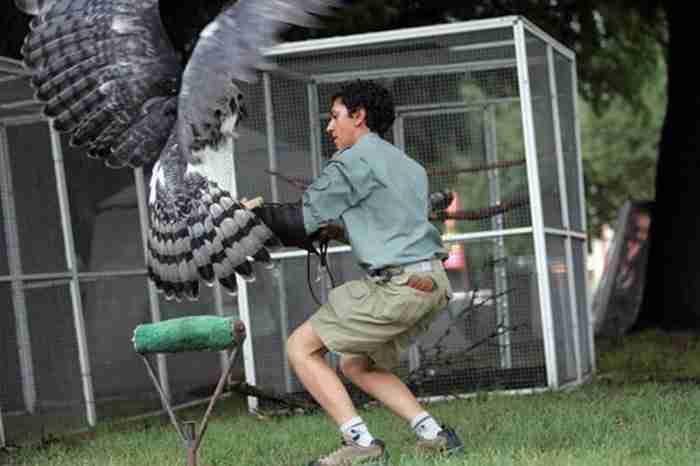 Αυτό το πουλί είναι ένα από τα μεγαλύτερα στον κόσμο και κρύβει ένα ενοχλητικό μυστικό.