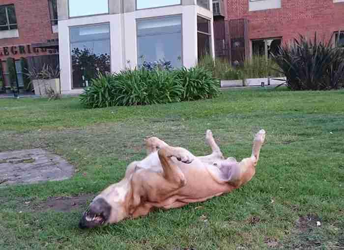 Ένα αδέσποτο σκυλί περίμενε κάθε μέρα μια αεροσυνοδό έξω από το ξενοδοχείο της. Τελικά το υιοθέτησε!
