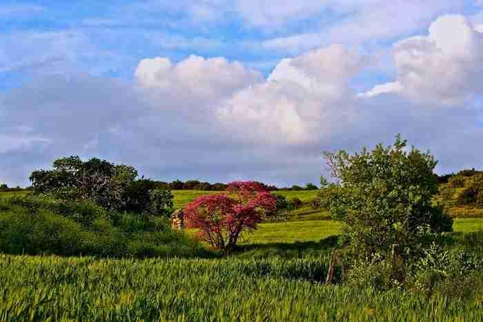 Τα χρώματα του Θεσσαλικού κάμπου μέσα από 17 υπέροχες φωτογραφίες!
