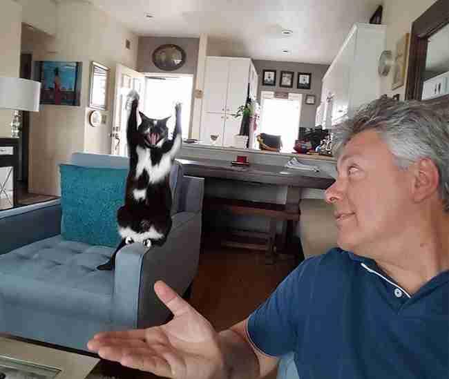 Αυτή η γάτα σηκώνει συνέχεια τα μπροστινά της πόδια ψηλά. Και κανείς δεν γνωρίζει γιατί!
