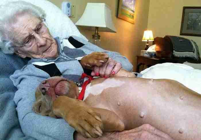 Συγκινητικές εικόνες: Όταν ο σκύλος προσφέρει αγάπη σε ανθρώπους που έχουν ανάγκη