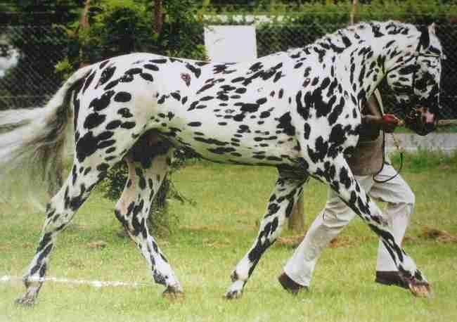 10 άλογα με τα πιο ασυνήθιστα και υπέροχα χρώματα στον κόσμο. Το # 5 είναι απλά εκπληκτικό!