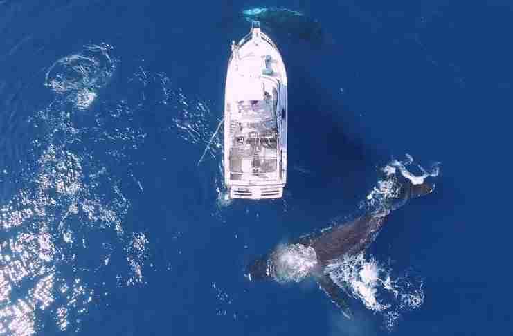 Απίστευτο βίντεο από drone δείχνει τρεις φάλαινες να κυκλώνουν και να «χορεύουν» γύρω από ένα σκάφος!