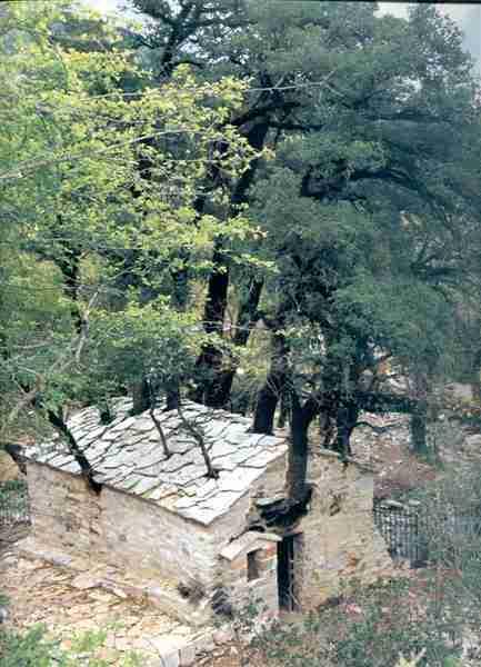 Ανεξήγητο θαύμα της φύσης: Το εκκλησάκι με τα 17 δέντρα στην Αρκαδία που μπήκε στο βιβλίο ΓκίνεςΑνεξήγητο θαύμα της φύσης: Το εκκλησάκι με τα 17 δέντρα στην Αρκαδία που μπήκε στο βιβλίο Γκίνες