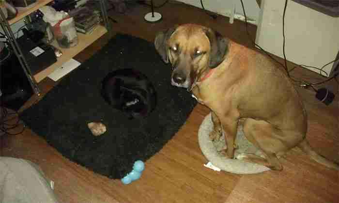 20 αναιδέστατες γάτες που έκλεψαν τα κρεβάτια των σκύλων και το.. απολαμβάνουν