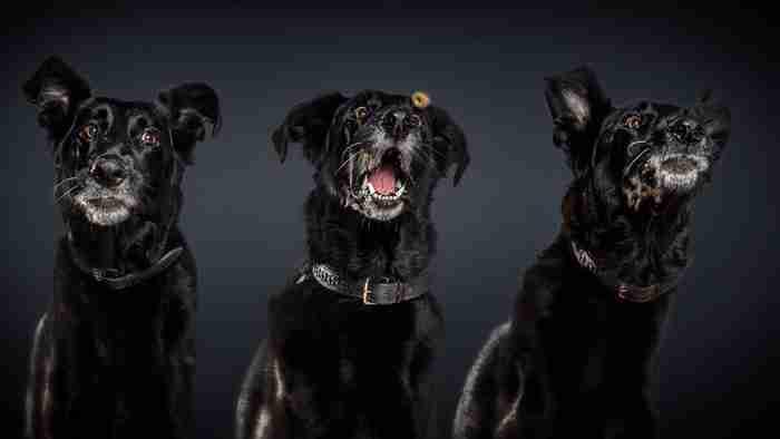 Φωτογράφος απαθανατίζει τις ξεκαρδιστικές γκριμάτσες σκύλων την στιγμή που πιάνουν λιχουδιές στον αέρα